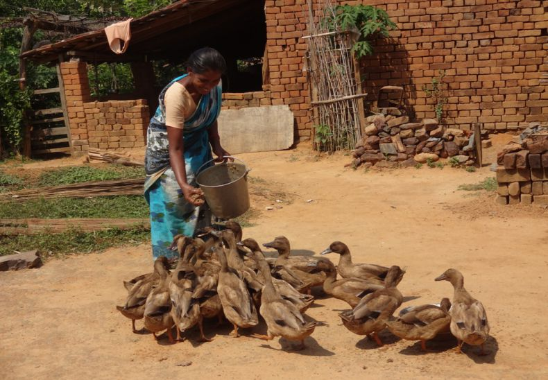 Duckery as income generation by single women