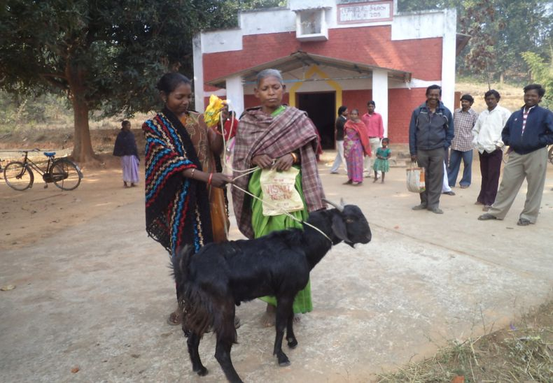Billy goat support to women SHG